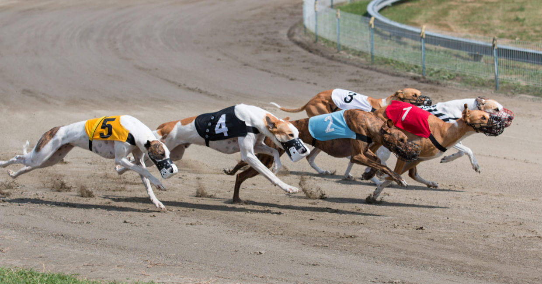 Casinoper Köpek Yarışları